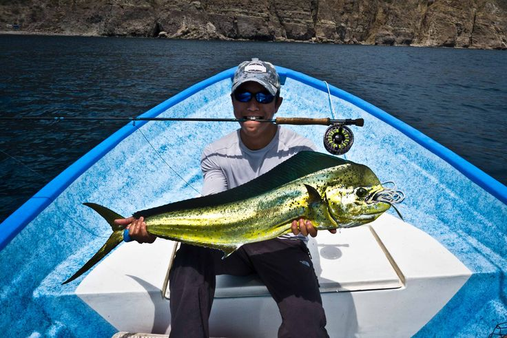 31 best dorado dolphin fish images on pinterest for Loreto mexico fishing
