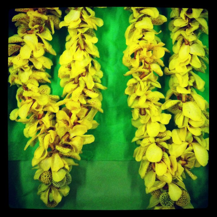Traditional wedding Hindu garlands.Cost-$65(55inches in length yellow mokara orchid)(buy it at www.noveltylei.com)