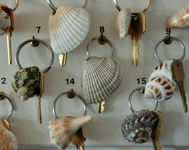 Shell Key Chains