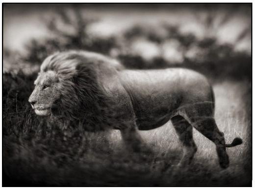 Incríveis animais africanos