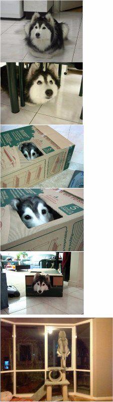 자기가 개 인줄 아는 고양이.jpg | 유머 게시판 | 루리웹 모바일