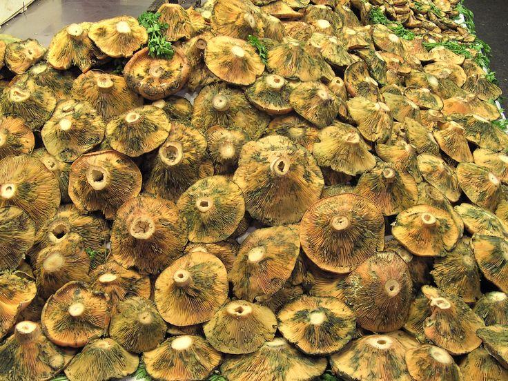 Mushrooms in market in Barcelona