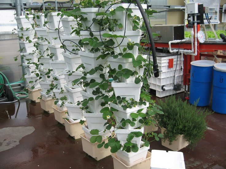 Hydroponic Quot Stackers Quot On Bato Buckets With Strawberries