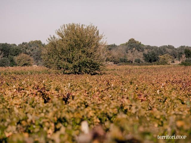 La terra di Puglia, semplicemente. #vino #food #wine # italy