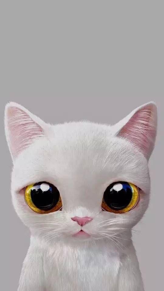 White Cat Phone Wallpaper Fond D Ecran Chat Blanc Telephone