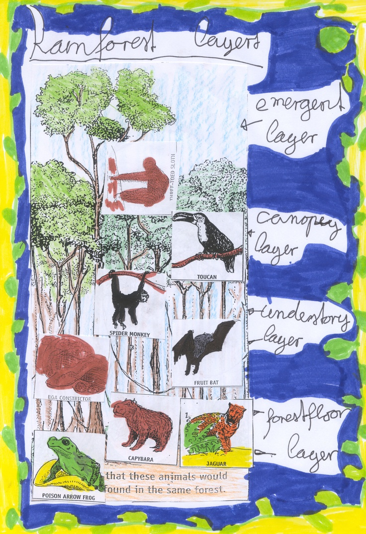 layers of the rainforest collage Biomes, Learning