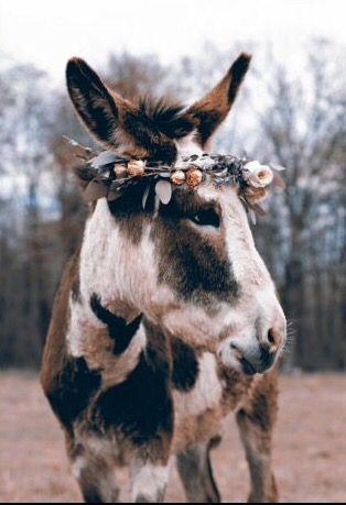 Love This Gypsy Donkey ready fro Burningman