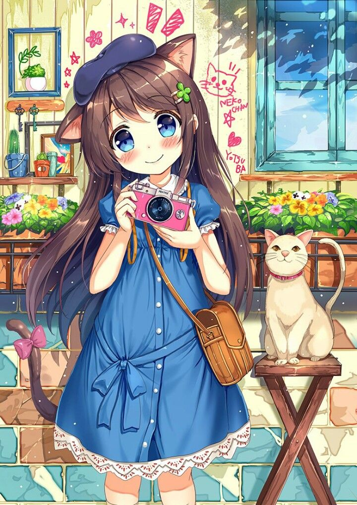 Foto on the cat