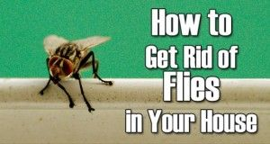 How to Get Rid of Fruit Flies in House Naturally