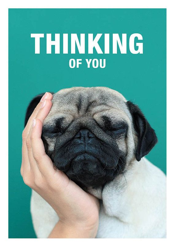 Thinking of You - Loulou the Pug