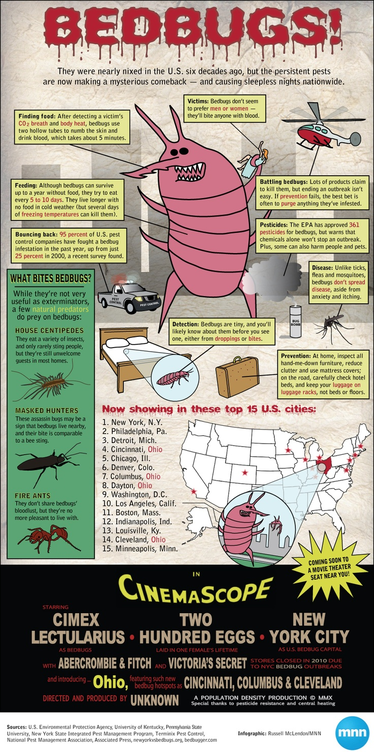 Bed Bugs What They Are And How To Control Them - Glad seattle s bedbug free for
