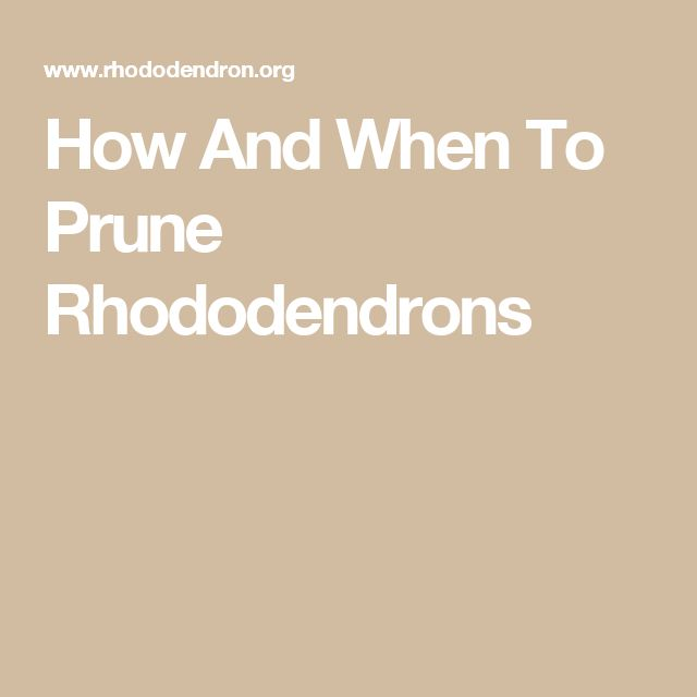 How And When To Prune Rhododendrons