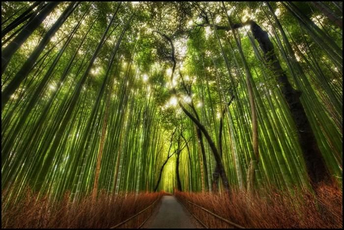 The sun touching the bamboo forest of Kyoto.