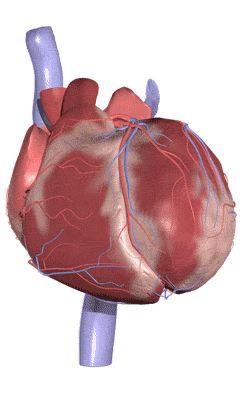 Primal Picture, Atlas de Anatomia Humana 3D  http://www.anatomy.tv/default.aspx