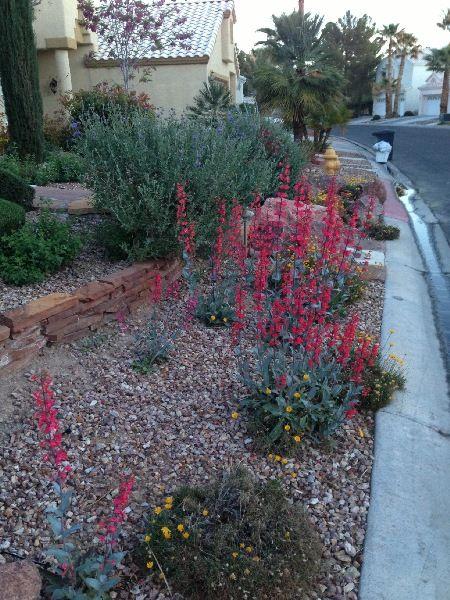 25 best ideas about High desert landscaping on Pinterest