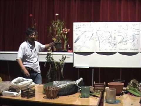 Curso básico de cultivo de Orquídeas - Parte 3