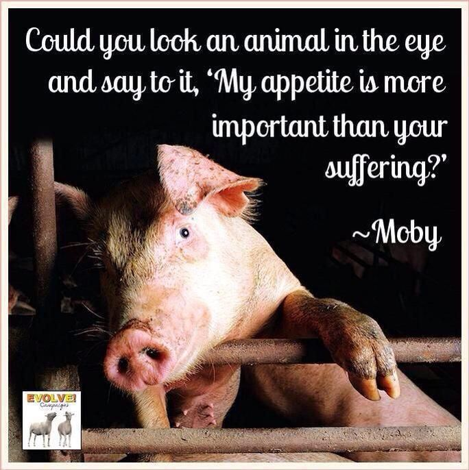"""could you look an animal in the eye and say to it, """"My appetite is more important than your suffering.?"""" courtesy ~Moby  #Govegan #vegan"""