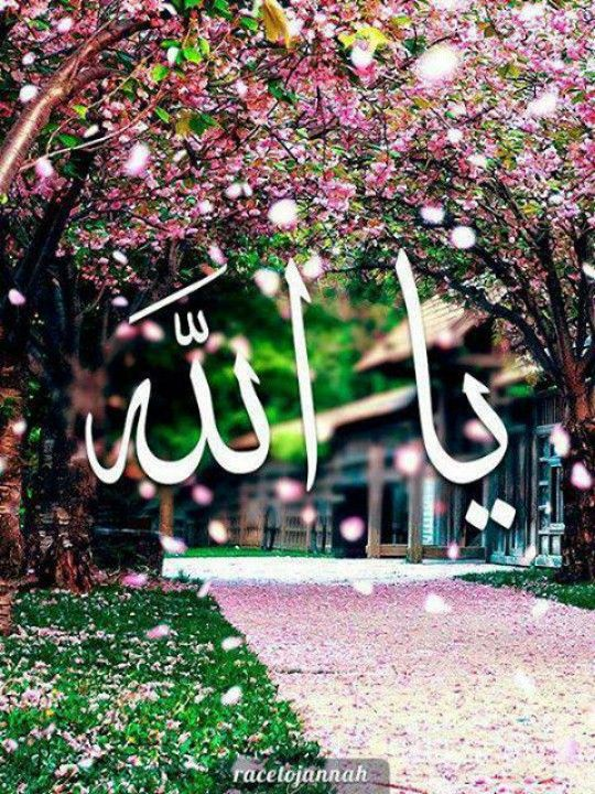 Ya Allah..I believe there is no god but ALLAH..allah is the one....