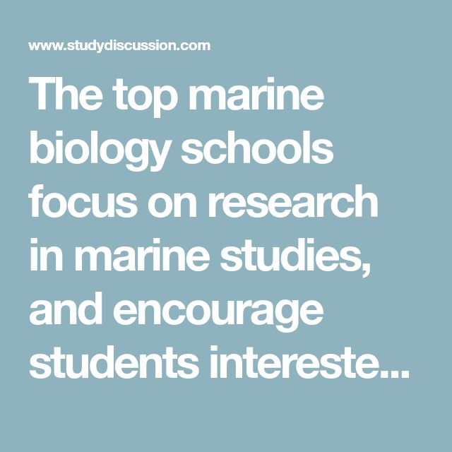 The top marine biology schools focus on research in marine studies, and encourage students interested in marine biology to join the graduate degree programs