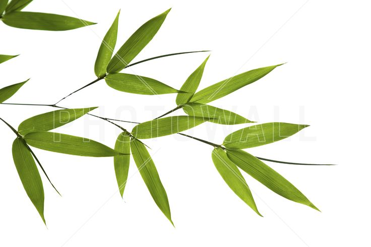 Bamboo Leaves - Fototapeter & Tapeter - Photowall