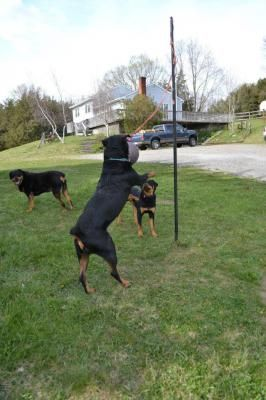 186 best dog enrichment images on pinterest dog stuff pets and in home doggie daycare or overnight boarding solutioingenieria Image collections