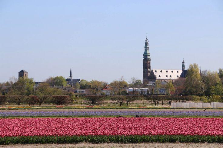 Lisse (Zuid-Holland)