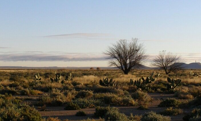 Stunning early morning scene, Groot Karoo, South Africa