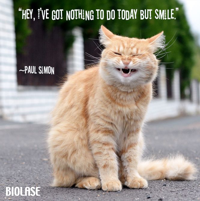 152 best images about Cute and Funny Animal Smiles on ...