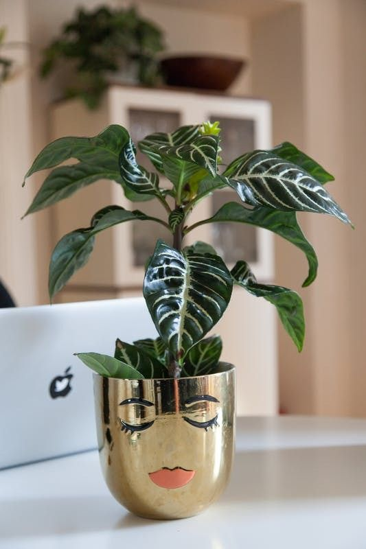 We love this small, quirky potted plant found within the space.