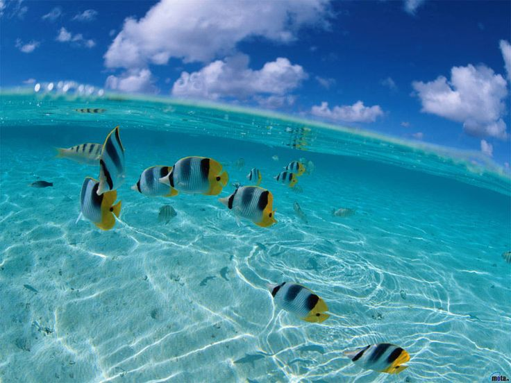 wonders of the world | View Ocean Wonders of The World images: