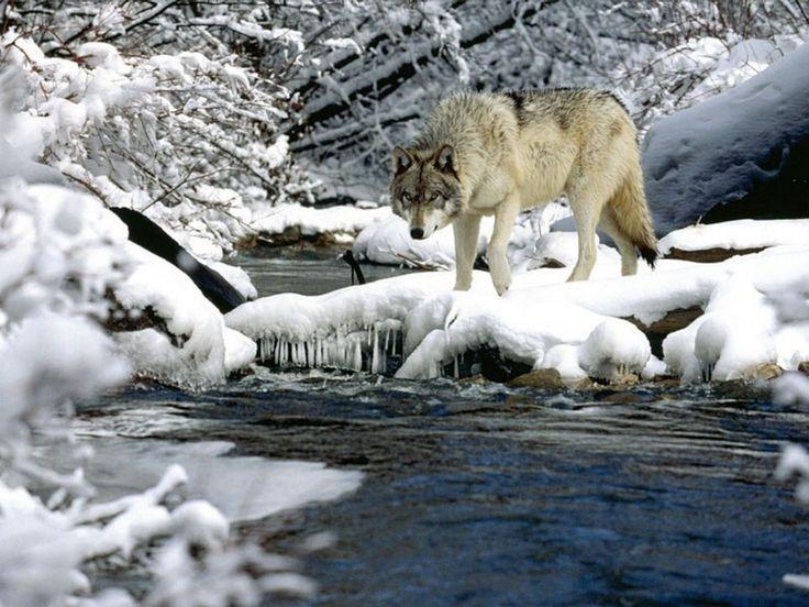 Best Winter Reindeer Elk Deer Etc In Snow Images On - 30 wonderfully wintery scenes around world