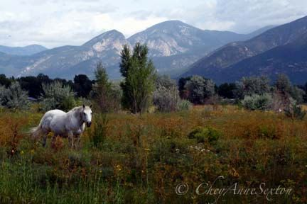 "Photography White Horse  ""I began to see with Mine Own Eyes""  by CheyAnneSextonMexico Hors, Beautifuljust Beautiful, Hors Landscapes, White Horses, Horses Landscapes, Hors Photos, Eyescheyann Sexton, Horses Photos, Landscapes Photography"