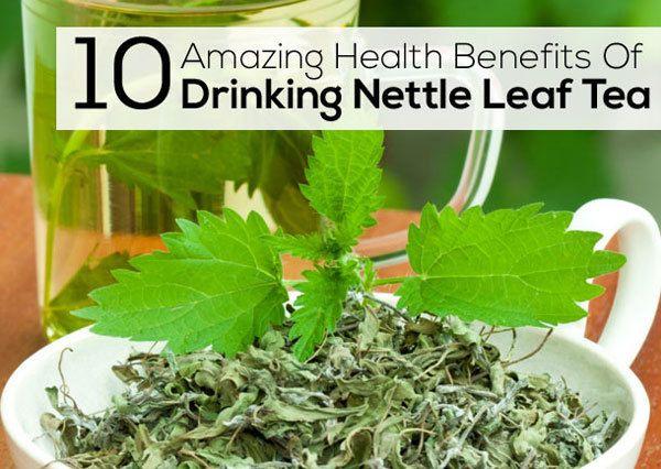10 Amazing Health Benefits Of Drinking Nettle Leaf Tea