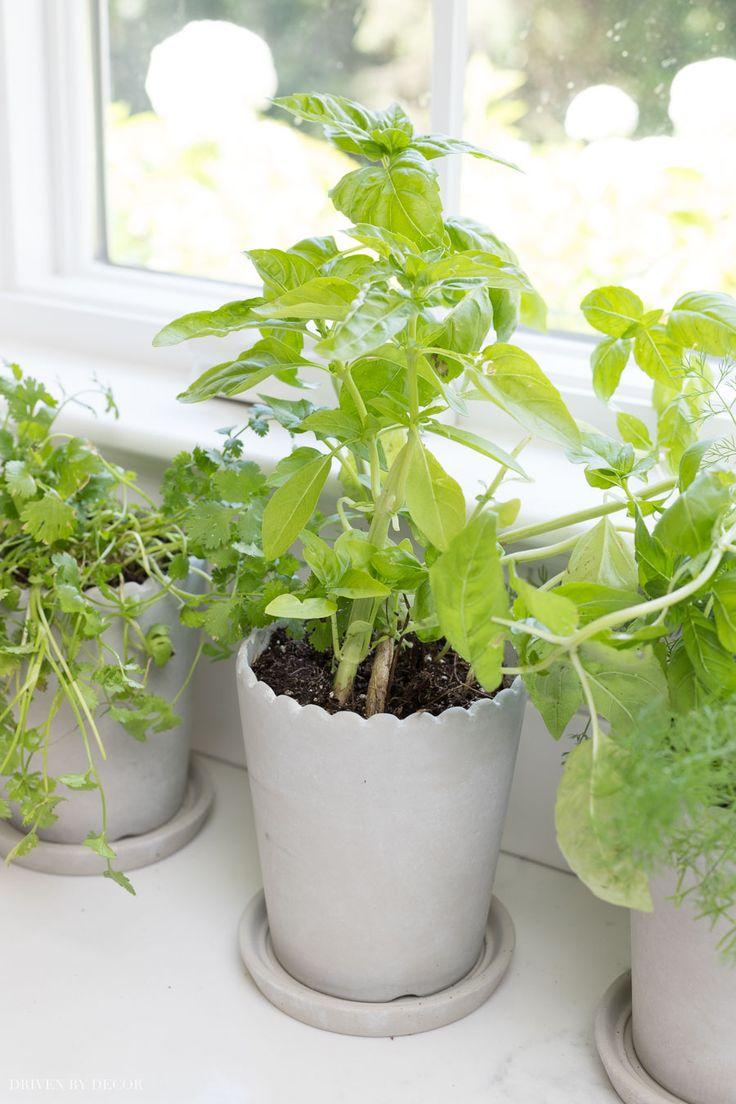 My Mini Indoor Herb Garden, The Perfect Alternative to