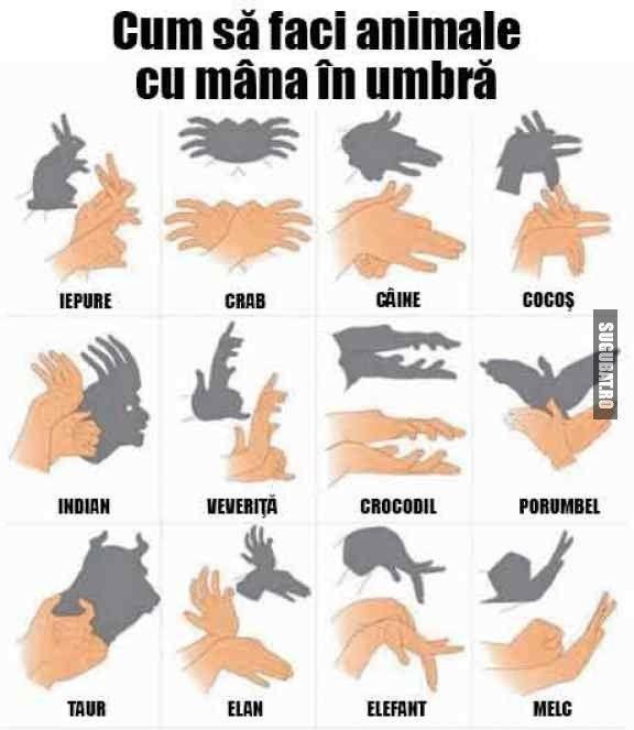 Cum sa faci animale cu mana in umbra