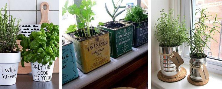 25 best plantes vertes aromatiques images on pinterest - Plantes aromatiques cuisine ...