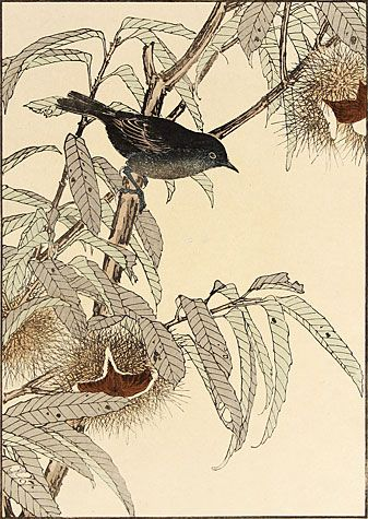 Imao Keinen. Japanese Chestnut, Flycatcher. Color woodblock, 1891. Oban