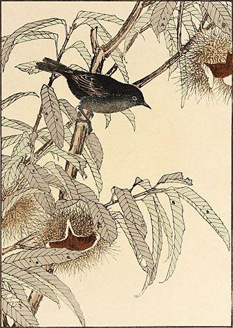 Imao Keinen. Japanese Chestnut, Flycatcher. Color woodblock, 1891. Oban