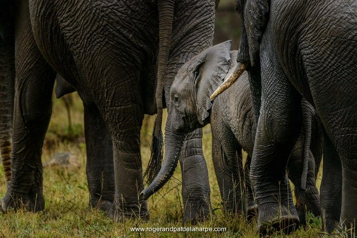Travelling to South Africa with Via Volunteers opens the door to amazing wildlife encounters. Elephant - Blyde River Canyon