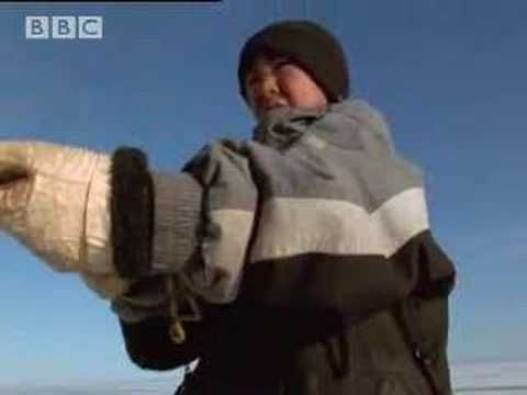 Narwhale hunting - A Boy Among Polar Bears - BBC - YouTube