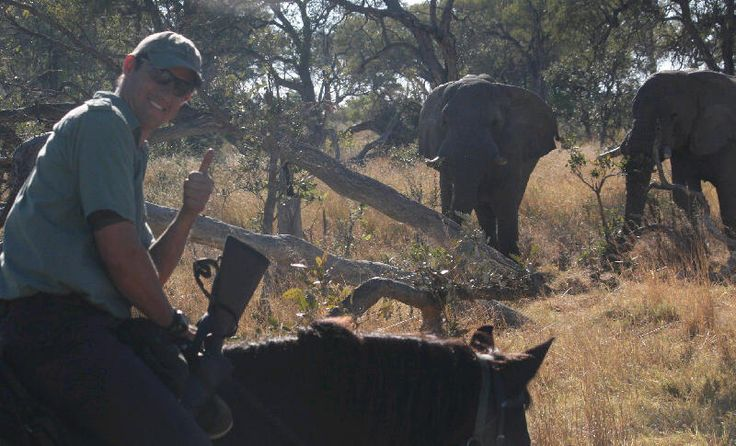 A great encounter with two old elephant bulls