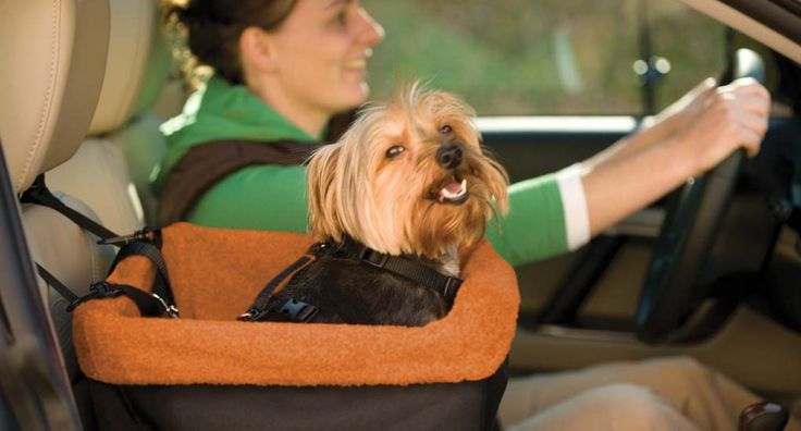 Top 5 Best Car Seats for Dogs - Top Dog Tips