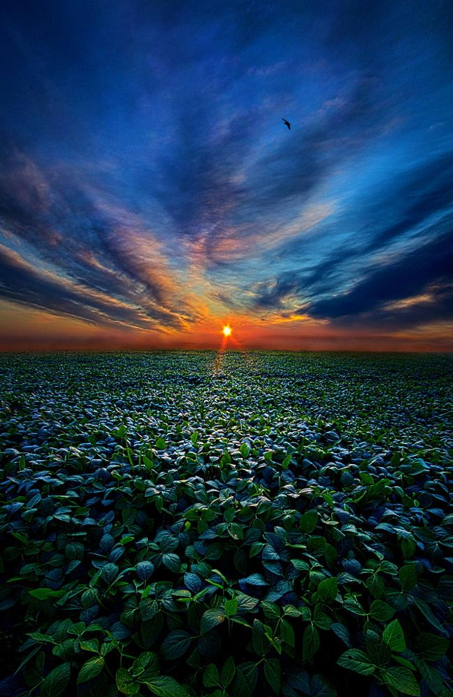 Farmer's Delight by Phil Koch on 500px