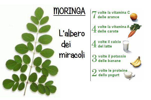 Moringa: l'albero miracoloso che può purificare l'acqua non potabile. E' interamente commestibile ha proprietà provate dalla scienza. Scoprine i benefici!