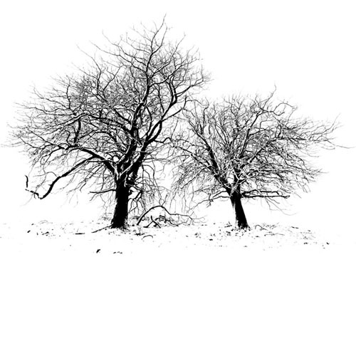 Two Trees Brush by: roon1305 ~ Design ShareDesign Shared, Digital Freebies, Trees Brushes