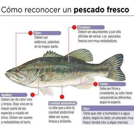Como conocer un pescado fresco.
