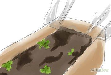 Como plantar morangos em vasos