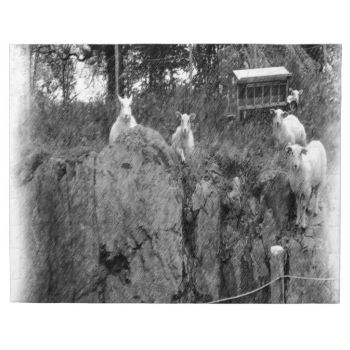 White and black sheep drawing made out of a photo of this sheep. #sheep #standing-sheep #sitting-sheep #many-sheep #animal #livestock #drawing photo-drawing