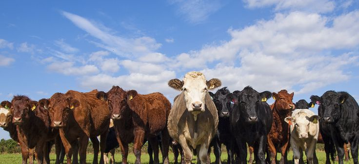 December 22, 2014: Daily price limit changes for feeder and live cattle futures