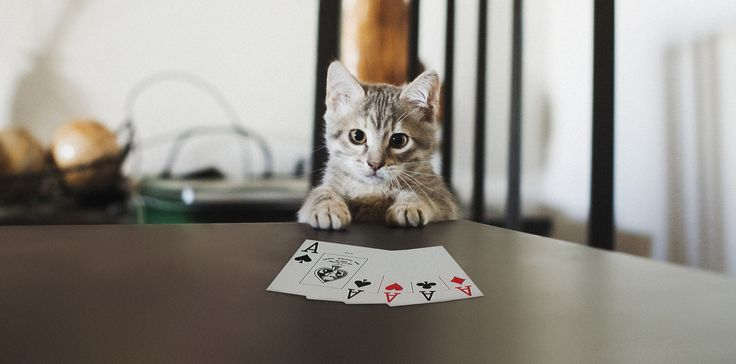 CAT POKER FACE REMAKE by Plastikete  on 500px